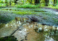 被苔藓和水洼覆盖的混凝土