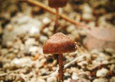 在森林里发现的小蘑菇