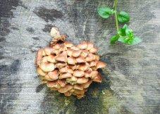 从树墩上生长的蘑菇